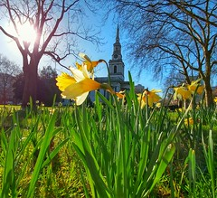 Spring by All Saints (Toni Kaarttinen) Tags: uk unitedkingdom gb greatbritain britain london england المملكة المتحدة regneunite vereinigteskönigreich britio reinounido isobritannia royaumeuni egyesültkirályság regnounito イギリス verenigdkoninkrijk wielkabrytania regatulunit storbritannien anglaterra tinglaterra englanti angleerre inghilterra イングランド engeland anglia inglaterra англия londres lontoo londra ロンドン londen londyn лондон spring flowers allsaints church ¨
