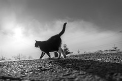 A relaxed walk into the morningfog (Black&Light Streetphotographie) Tags: monochrome mono urban trier tiefenschärfe tier availablelight animals katze city closeup cat wow nahaufnahme nature natur noir nebel nebelig fog sony streetshots streets streetshooting schwarzweis street streetportrait sonya7ii streetphotographie fullframe dof deepoffield blackandwhite blackwhite bw bokeh bokehlicious