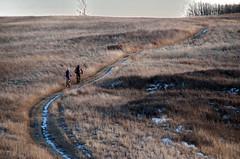 Last Ride (Bracus Triticum) Tags: last ride cycling bicycle calgary カルガリー アルバータ州 alberta canada カナダ 12月 december winter 2017 平成29年 じゅうにがつ 十二月 jūnigatsu 師走 shiwasu priestsrun
