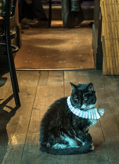 The Pub Cat ( The Seven Stars Pub - Carey Street - Holborn - London) (Cold Tone Effect) (Panasonic Lumix LX100) (1 of 1)