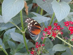 P4190143 (Steve Guess) Tags: horniman museum butterfly forest hill london england gb uk