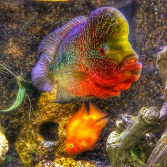 Schack's Fish (BMZYGrace) Tags: fish tropical animals swimming water aquarium colorful bright saltwater