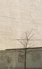 Minimalist Tree (richardroyle) Tags: simple minimalism color colorful contrast lowcontrast colored pink tank tan dark light wall architecture lines trees nature boston massachusetts brick texture textured blank canvas art artistic artsy afternoon midday sunset digital dslr nikon d3100 hipster hip new unique different experiment experimental wrinlkle dirty urban street minimalistic little size proportion angle composition diagnols diagonals thirds sun sunlight harsh mood papyrus sandy orange yellow black brown vertical pretty beautiful gorgeous