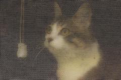 CURIOUS CAT (sadler0) Tags: curious cat curiouscat © roger sadler
