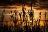 (Sebtaui2010) Tags: sunset atardecer sol contraluz naranja sunrise