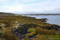 Coast of Roundstone (Nelleke C) Tags: 2017 letterdyfehouse roundstone coast connemara countygalway holiday ierland ireland kust landscape landschap vakantie