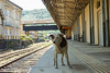 SriLanka 17_18 (8 von 48) (philip.eggimann) Tags: srilanka reisebilder travelling