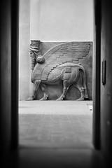Eyes on history and civilisation - lamassu (Oras Al-Kubaisi) Tags: lamassu assyrian iraq mesopotamia history civilisation