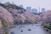 One of most beautiful spot (703) Tags: chidorigafuchi japan pentaxk3ii pn spring tokyo tokyotower cherryblossom cherryblossoms cityscape flower fullblooming pink さくら サクラ ソメイヨシノ ピンク 千鳥ヶ淵 日本 春 東京 東京タワー 桜 皇居 千代田区
