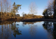 A scent of Japan in Thuringia (:Linda:) Tags: germany thuringia village schackendorf pond conifer pine reflection pinetree bluesky baretree tree