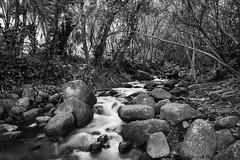 Creek, Haena Beach Park, Kauai Hawaii (klauslang99) Tags: klauslang nature naturalworld northamerica hawaii kauai creek water stone rocks trees haena beach