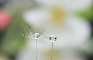 Spring droplet (Practice1)