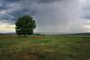 In anticipation (Xenofon Levadiotis) Tags: tree landscape thunder lightning lonely grass sole grevena macedonia kipouriou egnatia odos field hay cloud rain storm weather phenomenon κεραυνόσ δέντρο μοναχικό αγρόσ λιβάδι κηπουριό γρεβενά εγνατία βροχή απόβροχο σύννεφο συννεφιά τοπίο αέρασ wind