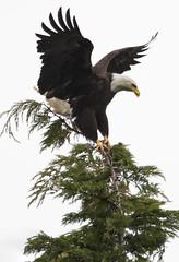 Big Bird Little Branch (TW Olympia) Tags: