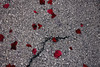 (mihxiii) Tags: flowersonthefloor 50mm f18 petals flowers ground colors