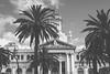 159/365 : City Hall (KitaDependence) Tags: cityhall málaga trees palm palmtree sky clouds nikon nikod610 d610 365 365project 50mm project bw blackandwhite