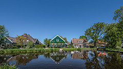 Springtime in Holland (- Jan van Dijk -) Tags: idyllic serene peaceful northholland netherlands nederland nl swan zwaan nederlandvandaag