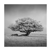 Magic Tree (Nick green2012) Tags: dartmoor infrared square silence blackandwhite minimal