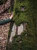 Pet tree | P2250025 (mkreibohm) Tags: texture wood tree bark moss nature plants plant organic closeup forest woods taunus germany trunk touch hand soft micro43 microfourthirds olympus olympusomdem1 em1 omd minimal minimalism minimalist