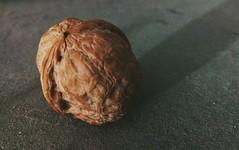 Walnut (zohaibusmann) Tags: walnut walnuts nuts dryfruits persianwalnut walnutmacro walnutcloseup loveofwalnuts walnutslovers macrophoto macrophotography dryfruit ngc zohaibusmanphotography poshe550 woodtexture