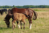 DSC_0930 (dmilokt) Tags: лошадь конь horse деревня village природа nature dmilokt