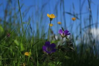 printemps dans les prairies de Mex