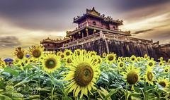 0S1A5584enthuse (Steve Daggar) Tags: vietnam hue citadel sunset