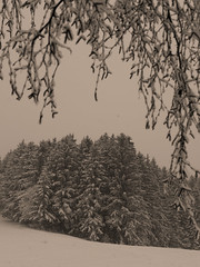 Vercors, 2018 (Olivier BERTRAND) Tags: vercors blackandwhite blackandwhitephotography digitalphotography neige forêt forest hiver hybridcamera isère landscape lumix25mm lumix landscapephotography monochrome micro43 noiretblanc nature naturallight olivierbertrand olympusem5markii olympus paysage panasoniclumix25mm woods winter snow 25mm