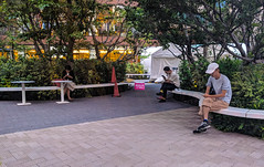 #152 modern isolation (tokyobogue) Tags: tokyo shibuya japan nexus6p nexus 365project people isolation phones trees bench