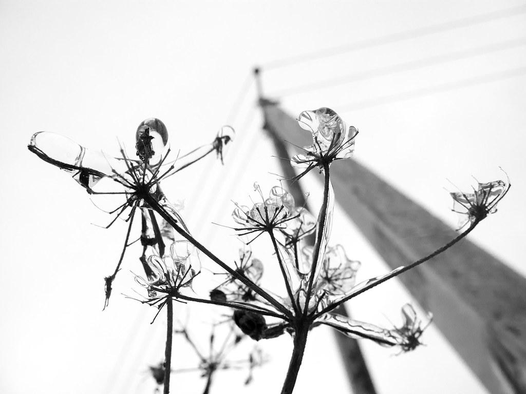 фото: Зимнее #1
