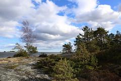 Evergreens (liisatuulia) Tags: bylandet porkkala kallio kivi meri saaristo archipelago sea