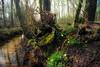 20180408-009 (Blotevoet) Tags: forest bos park green brown nature plants spring lente flowers bloemen mos moss sloot rivier beek channel stream water brook creek tree trees boom bomen