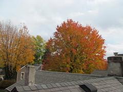 11-05-17 Dayton 69 leaves, fall color (Chicagoan in Ohio) Tags: dayton clouds sun sunhalo leaves fallcolor