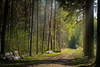 To create something (Petr Sýkora) Tags: les nature forest outside trees path natureseeker mothernature czech