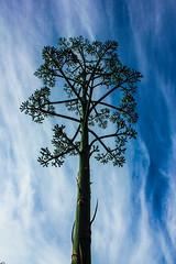 Mini tree (laura-melisande-gross90@web.de) Tags: miniatur tree sky realistic nature plants