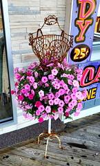 Memorial Day Weekend (SurFeRGiRL30) Tags: seasideheightsnj seasideheights boardwalk mannequin flowers pink pinkflowers newjersey store dress flowerdress pretty memorialdayweekend