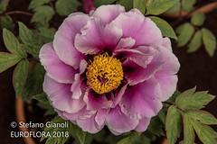 Liguria 2018 (Stefano Gianoli) Tags: 2018 anno citta euroflora genova primavera stagione