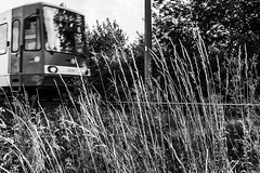 Driving to you (gambajo) Tags: 1year1town1lens brühl blackandwhite blackwhite black white tram drive driving transportation outdoors public strasenbahn kvb streetcar tramway electric trolley x100s fujix100s fujifilmx100s rails tracks grass