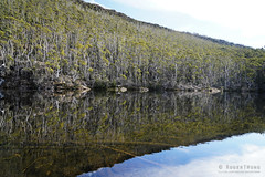 20180527-05-Beatties Tarn reflections (Roger T Wong) Tags: 2018 australia beattiestarn mtfield mtfieldeast np nationalpark rogertwong sel2470z sony2470 sonya7iii sonyalpha7iii sonyfe2470mmf4zaosscarlzeissvariotessart sonyilce7m3 tasmania bushwalk outdoors reflection tramp trees trek walk water