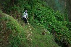 INDONESIEN, Java, Obst- und Gemüseanbau an den Hängen des  Tengger-Vulkanmassivs,  steil,  17517/10093 (roba66) Tags: urlaub reisen travel explore voyages visit tourism roba66 asien asia indonesien indonesia java ostjava bauern ernte rural landwirtschaft steilhang l