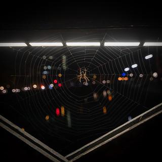 Partytime in the spiderweb - Partyzeit im Spinnennetz