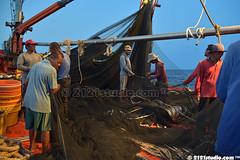 207 Teamwork (2121studio) Tags: fishing boat fisherman nelayan southchinasea southeastasia pukat jerut purseseinesfishingnet marine fish tangkapikan ocean lkim perikanan fishery lifeoffisherman kehidupannelayan tekong awakawak crew ikan aya tuna