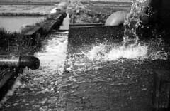Overflow (odeleapple) Tags: leica lllf elmar 5cm kodaktmax100 film monochrome analog bw overflow irrigation water paddy field
