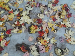 11-07-17 Dayton 04 leaves, fall color (Chicagoan in Ohio) Tags: dayton clouds sun sunhalo leaves fallcolor