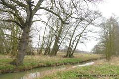 """River Flit"" P1270663 (Pitzy's Pyx, keep snapping away!.) Tags: greensandtrust greensandvolunteers lumixfz1000 riverflit greensandridge sandysmithnaturereserve"