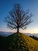 Baum - zwischen Schatten und Sonne (uhu's pics) Tags: landschaft landscape natur nature baum tree sonne sun schatten shadow hügel hill abend evening fuji fujifilm fujinon xpro emmental schweiz switzerland suisse