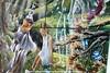 20180300 *** EXPOSICIONES - 6ª Muestra Artística Colectiva de la Asociación Cultural Bohemia - 2018 (C. Cultural Biblioteca Montequinto (Dos Hermanas)) Tags: bibliotecamunicipalmigueldelibes bibliotecademontequinto centroculturalbibliotecademontequinto doshermanas exposiciones pintura manualidades esculturas