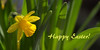 Happy Easter ! (pe_ha45) Tags: ostern easter pâques pasqua pascua pasen narzisse narcisse narcis narciso daffodil flower fleur