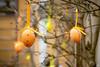 91/365 (misa_metz) Tags: nikon outdoor colors sigma spring photo photography wood tree egg easter orange holiday