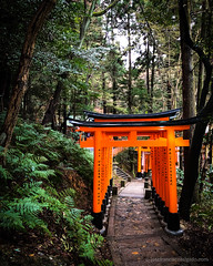 Fushimi Inari-taisha (josefrancisco.salgado) Tags: apple fushimiinaritaisha japan kyoto shintoshrine torii iphone iphone8plus santuario shrine kyōtoshi kyōtofu jp forest bosque